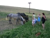 Naše koníky