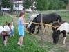 Deti pri koníkoch